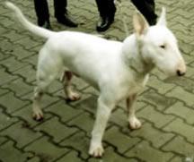 Matthias' Dog Bronson
