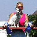 Maddie - Jack Russel Terrier
