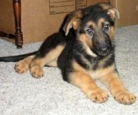 2011 Puppy 1