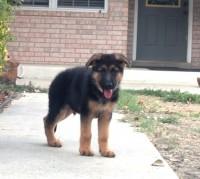 2011 Puppy 2