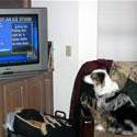 Opie watches TV