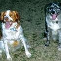 Paula & Gary's dogs
