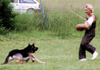 Matthias at National Schutzhund III Qualification 2